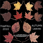 Autumn Leaves PNG Graphics
